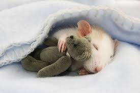 Sladký spánok